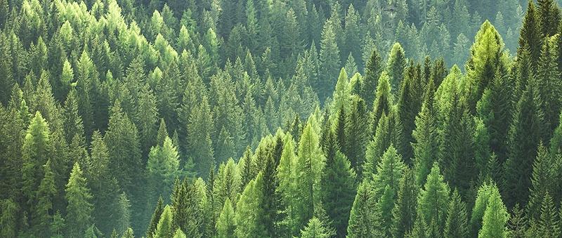 HeaderSustainableForestry1060x450px